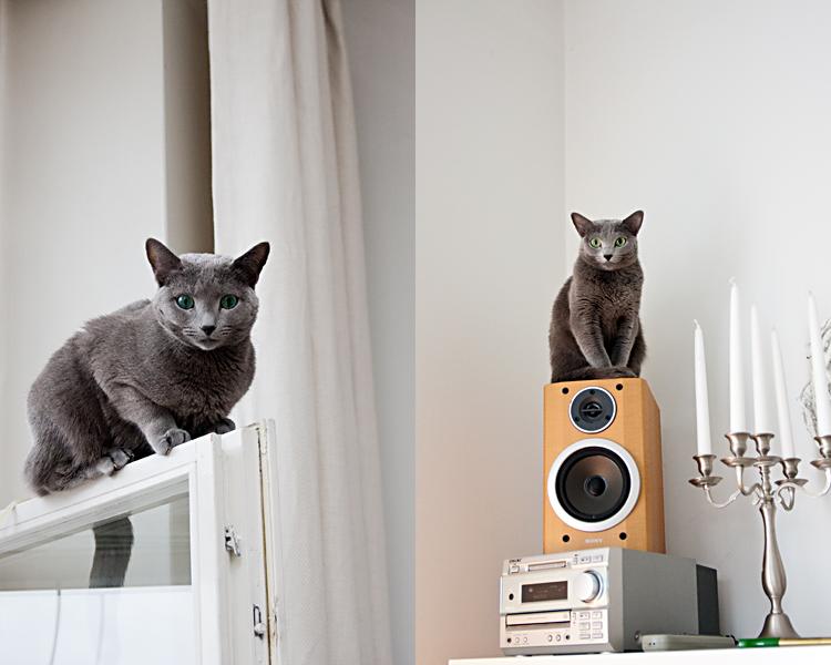 Kissat eivät onneksi välitä, jos heidän kuvansa blogissa vilahtaakin. Vai välittävätkö :)