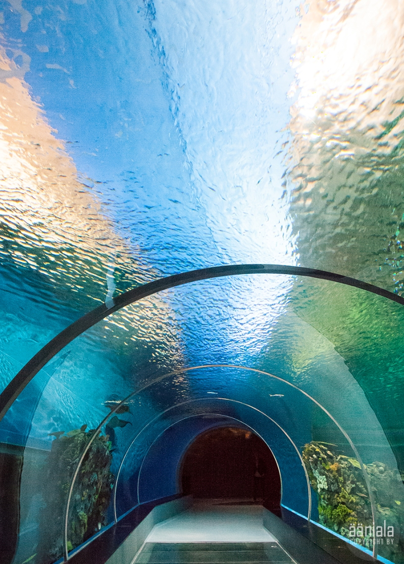 akvaario_4
