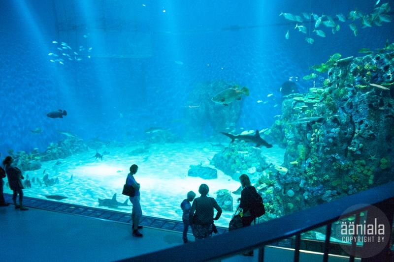 akvaario_5