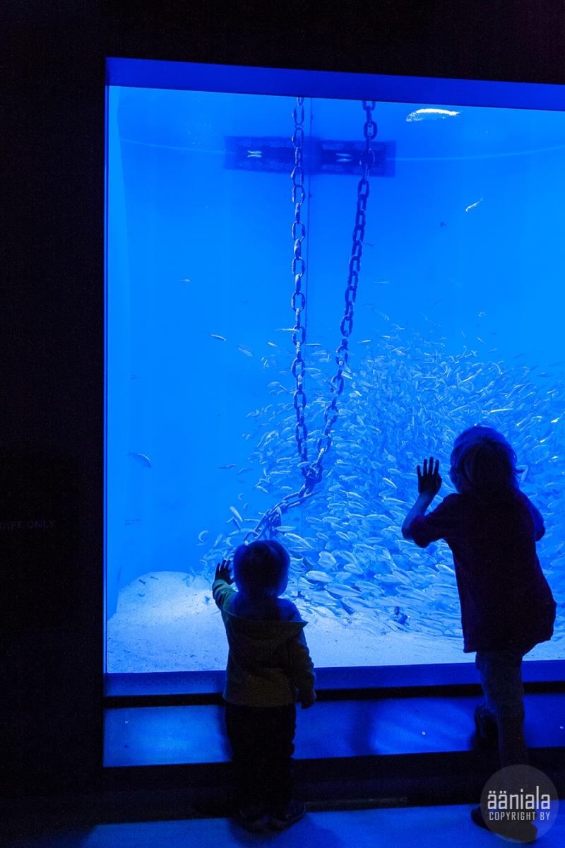 akvaario_7